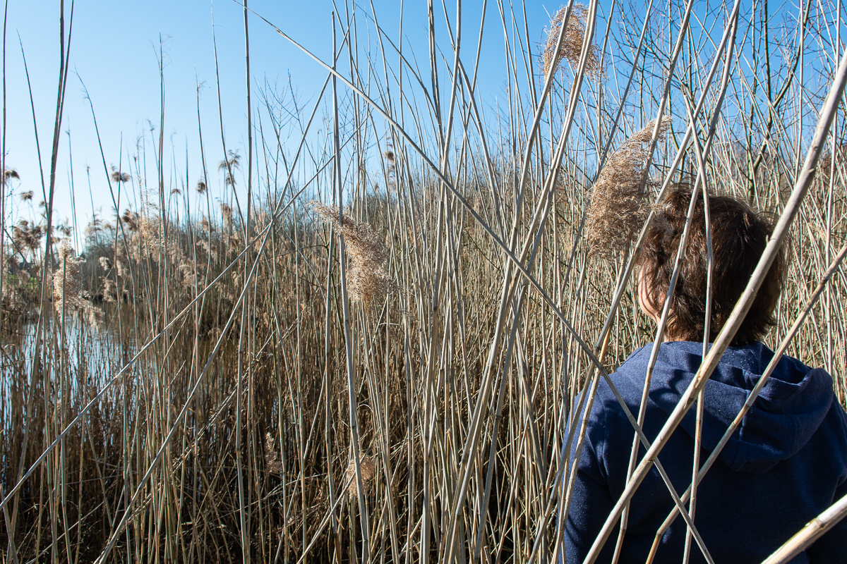 Somebody standing amongst tall grass by a pond